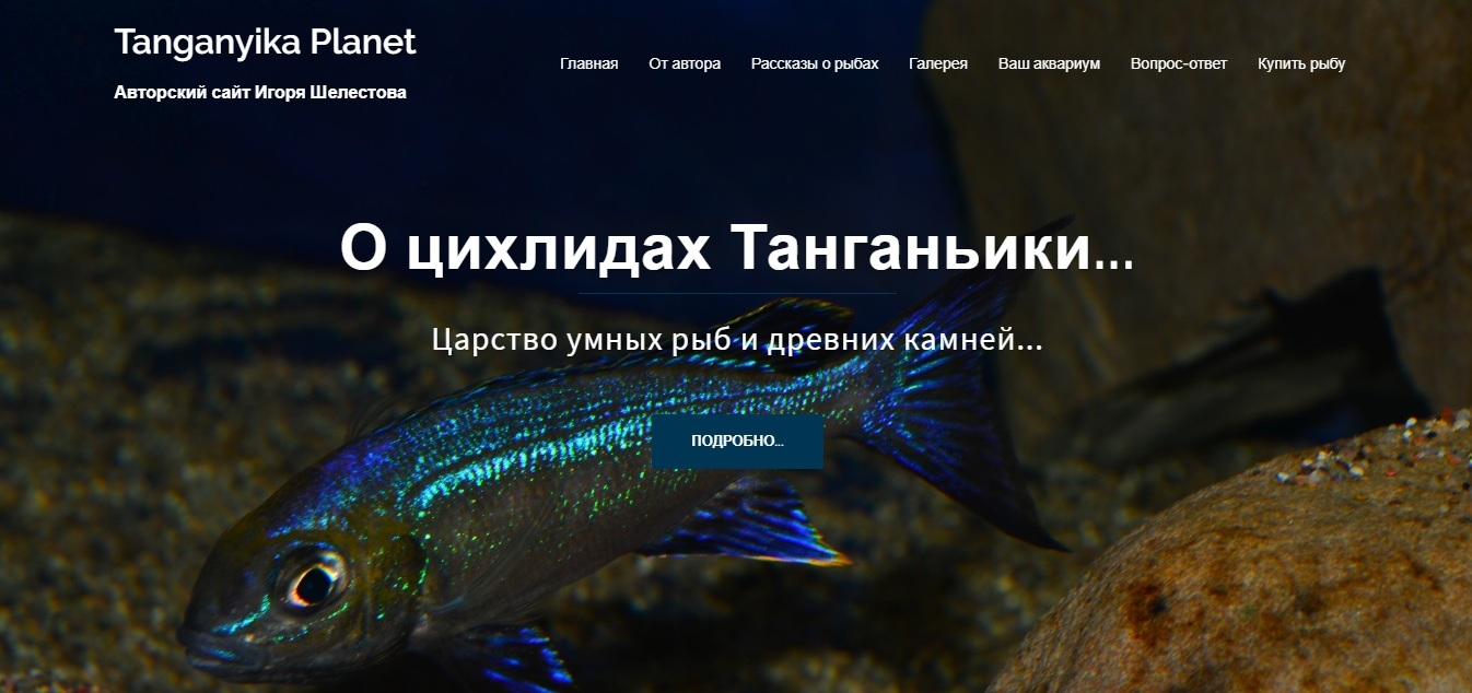 Разработка и создание авторского сайта